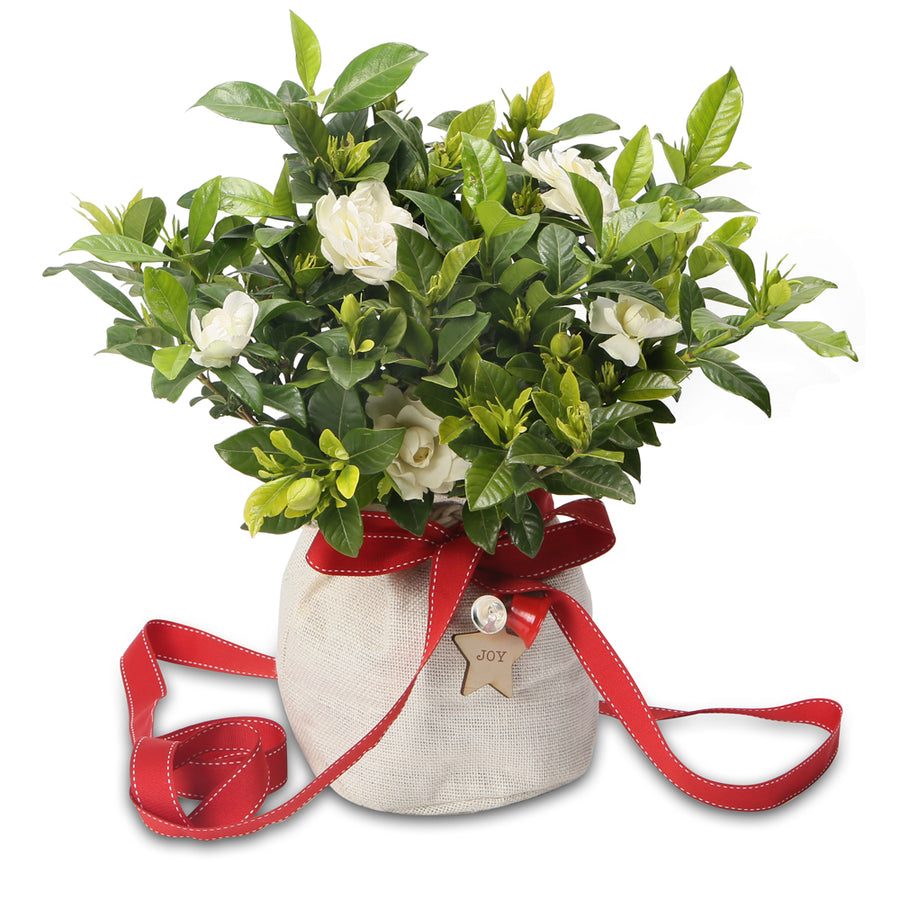 Christmas Plants & Gift Hampers - Growing Gifts
