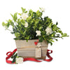 fragrant gardenia christmas planter