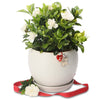 fragrant gardenia christmas orb bowl
