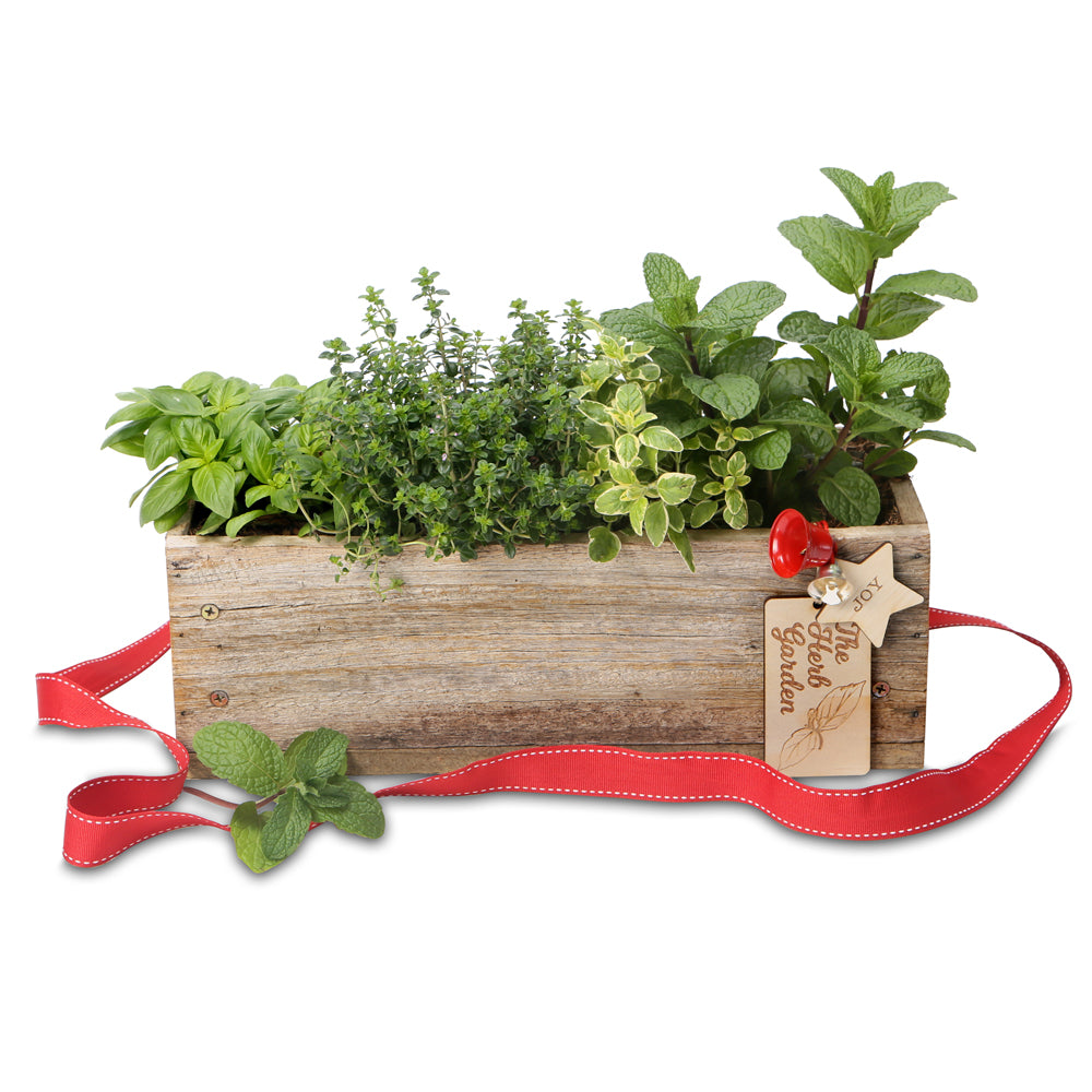Christmas herb rectangle gift box