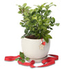 Luscious Lemon tree Christmas orb bowl