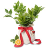 luscious lemon tree christmas gift