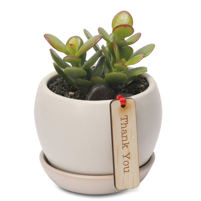 Jade lucky money tree belly bowl