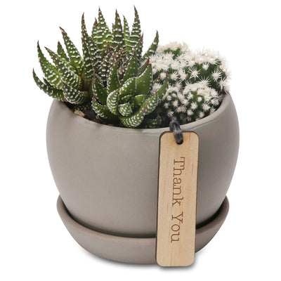 succulent & cacti duo belly bowls