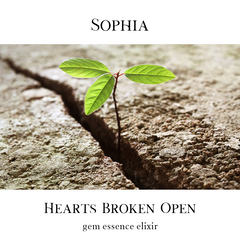 A small green plant sprouts through a crack in the sidewalk. The words: Sophia, Hearts Broken Open, Gem Essence Elixir