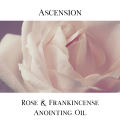 A white and pink rose gently opening. The words Ascension: Rose & Frankincense Anointing OIl