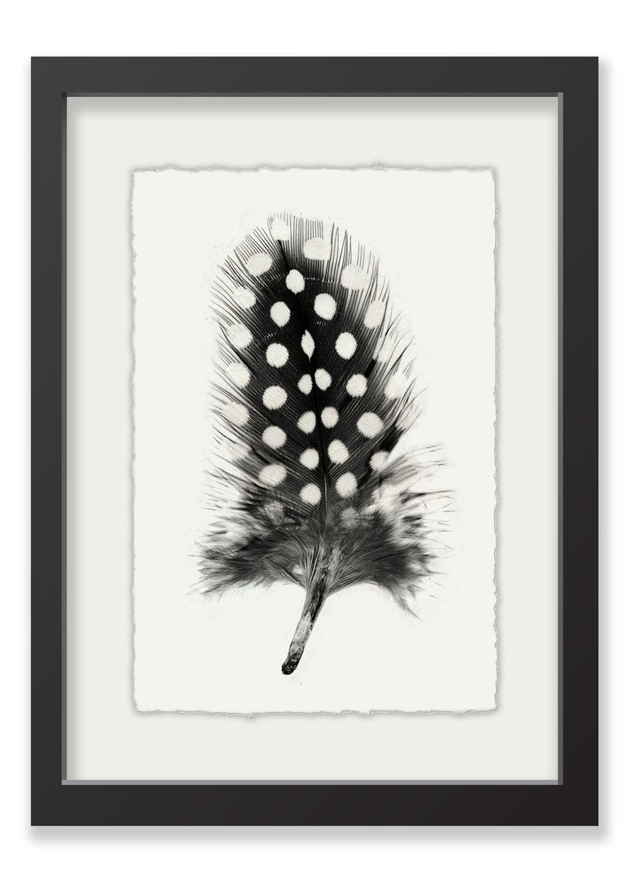 Feather 1 - English Watercolor Parchment - Black Frame with White Mat