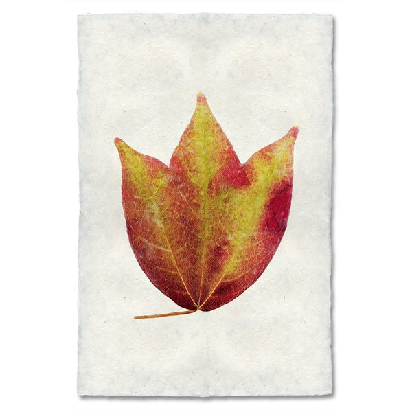 American Cranberry Autumn Leaf