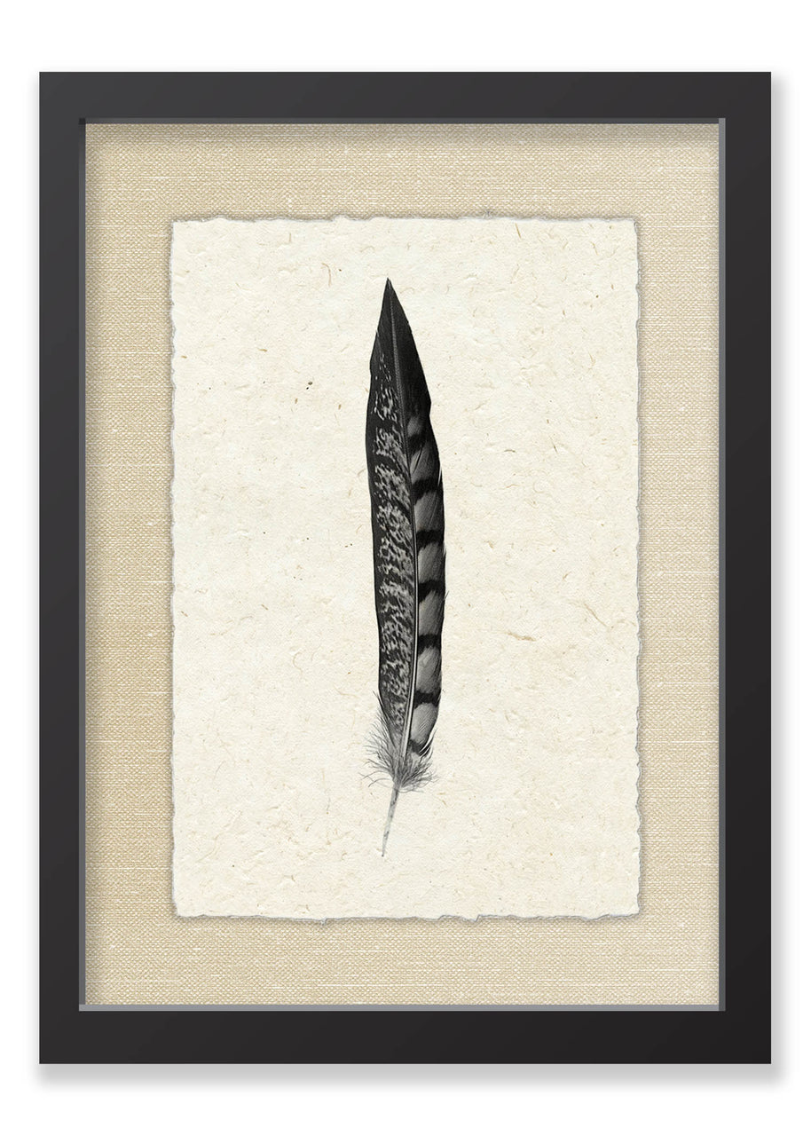 Feather #11