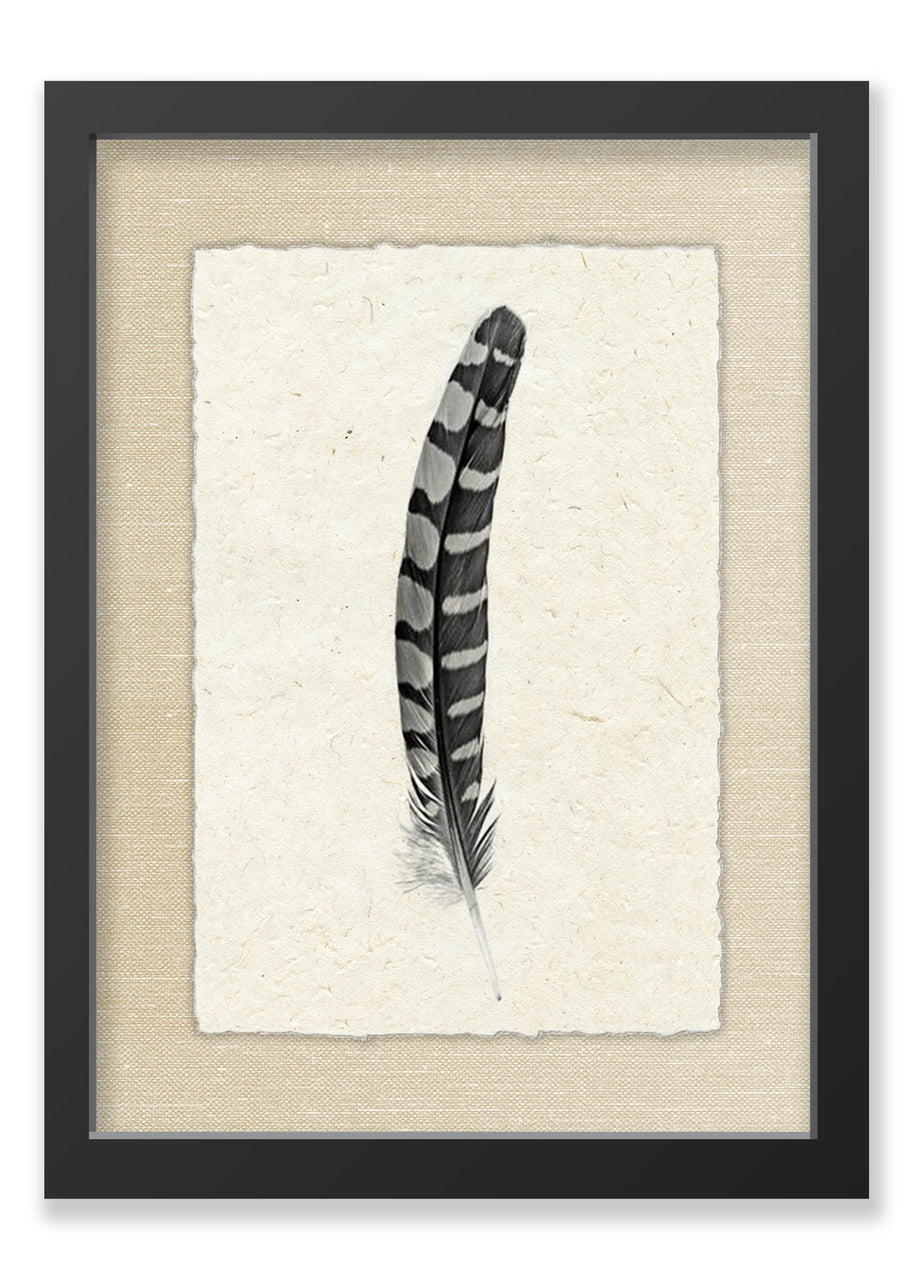 Feather #12
