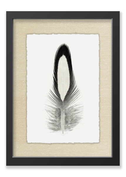 Feather #14