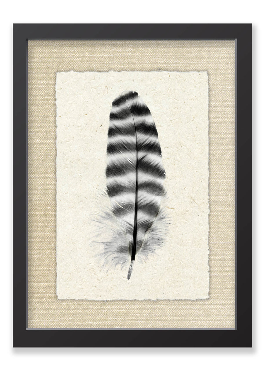 Feather #17