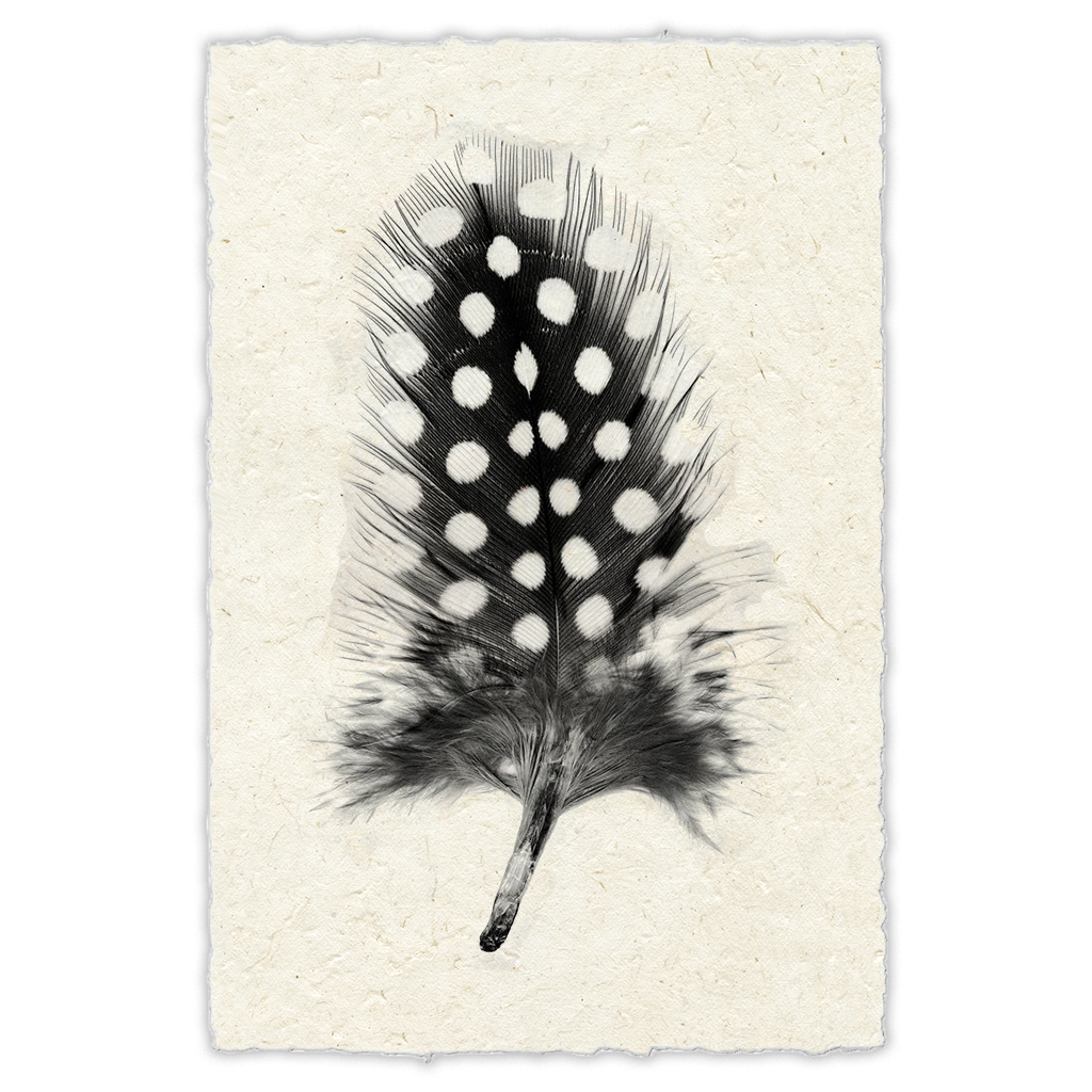 Feather #1 Print Nepalese Parchment