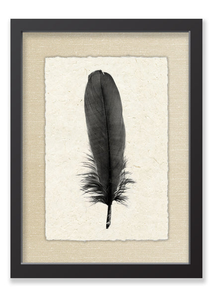 Feather #6