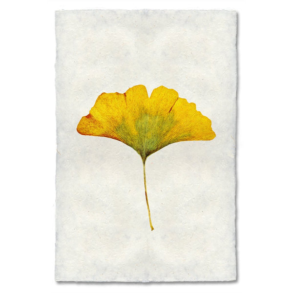 Ginko Autumn Leaf