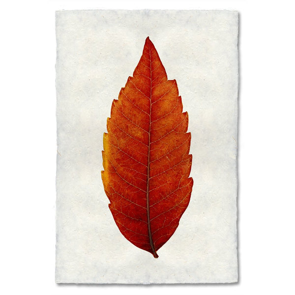 Sumac Autumn Leaf