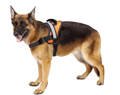 Pawsroad Big Dog Soft Reflective No Pull Harness Orange