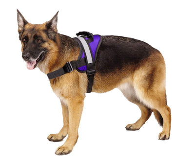 Pawsroad Big Dog Soft Reflective No Pull Harness Purple