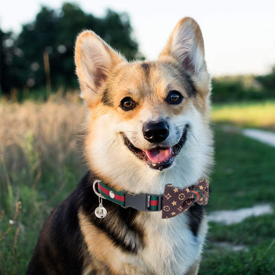 Cute Puppy Bowtie collars