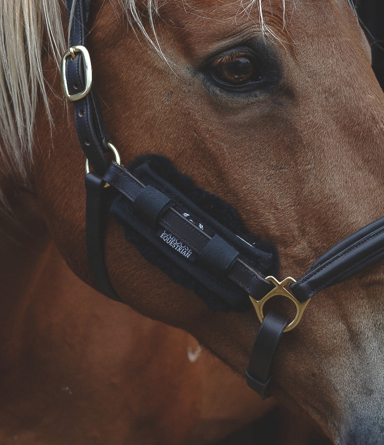Close up image of horse wearing Caboose Equestrian Sheepskin Chin Strap Cover on Cheek Piece