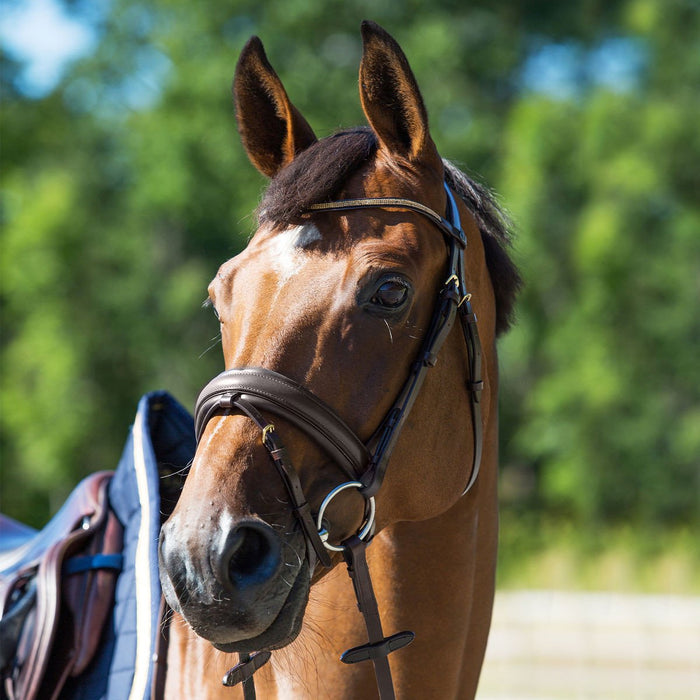 Photo of horse wearing Horze Crescendo Lester Bridle in BROWN