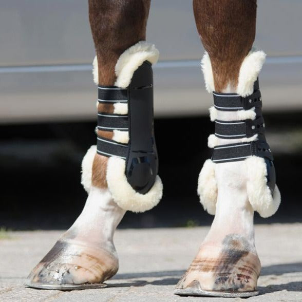 Photo of horse wearing QHP Ontario Tendon Boots in Black