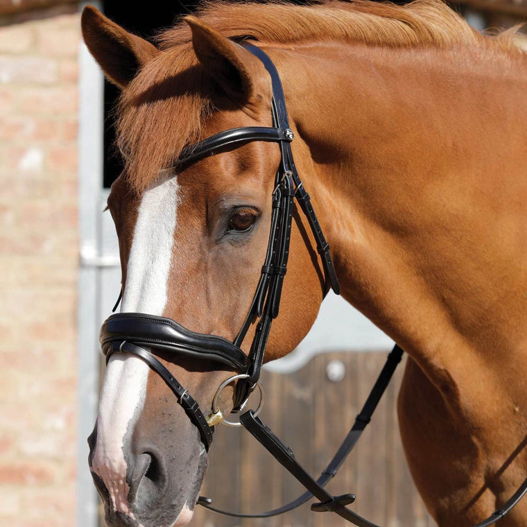 Premier Equine Rizzo Anatomical Snaffle Bridle