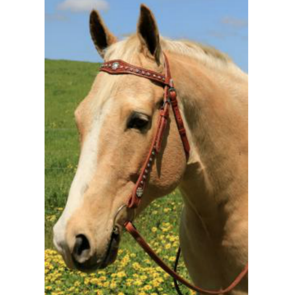 Photo of a horse wearing Cluster of Jewels Western Bridle