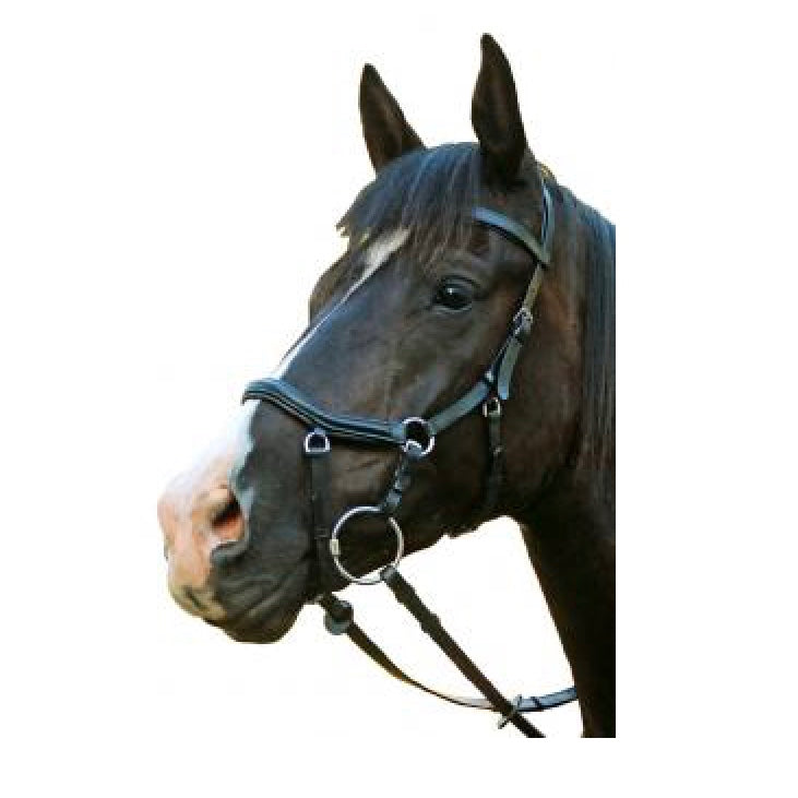 McAlister Competition Bridle