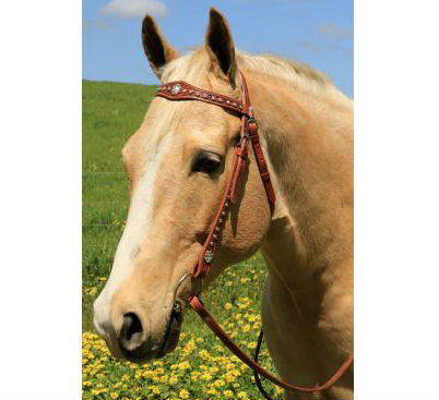 Photo of a horse wearing Cluster of Jewels Western Bridle in Tan