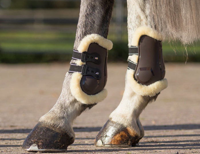 Photo of horse wearing QHP Ontario Fetlock Boots in Brown