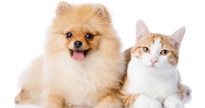 The Benefits of Grain Free Pet Food
