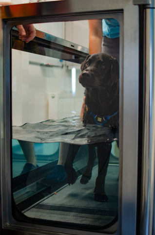 Pets-Purest-Hydrotherapy-Joint-Care-Dog