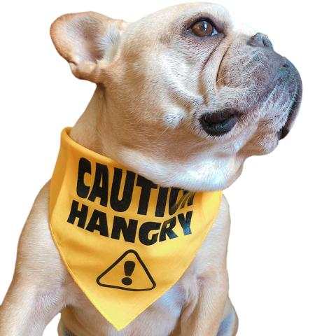 Caution Hangry Bandana - Allthingsfrenchie LLC