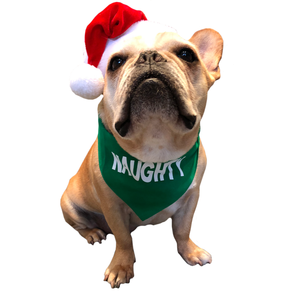 Naughty Bandana - Allthingsfrenchie LLC