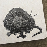 Possum Critter Journal