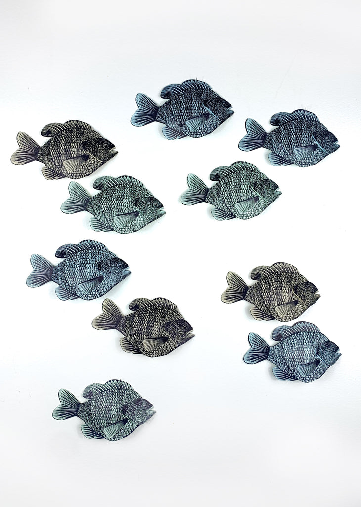 10 Wall Hanging Bluegill (Right Facing)