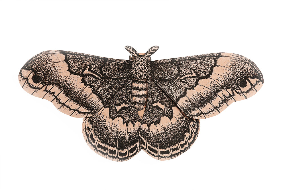 A paper sculpture of a moth, assembled from a kit printed from a hand carved block.