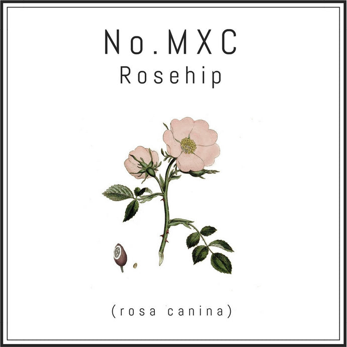 Featured Ingredient: Rosehip (Rosa Canina)- the Anti-Aging Oil