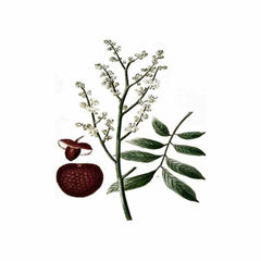 Bios Apothecary Lychee