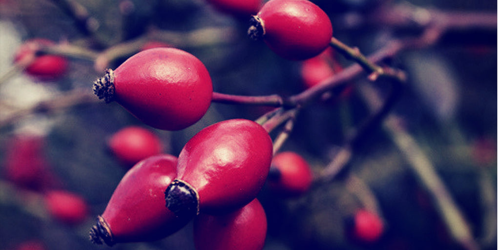 Featured Ingredient - Rosehip - Antiaging Oil