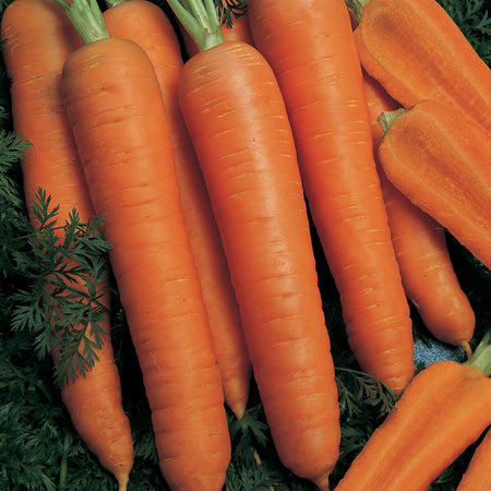 napoli carrots from Territorial