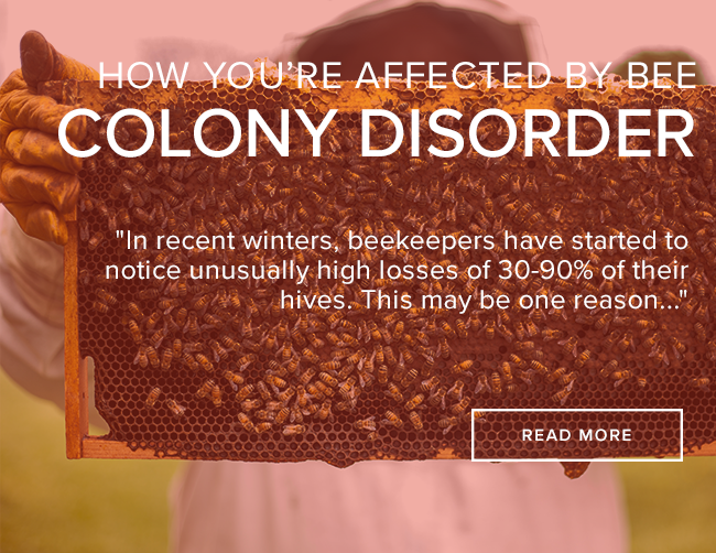 Bee Colony Collapse Disorder & How You're Affected
