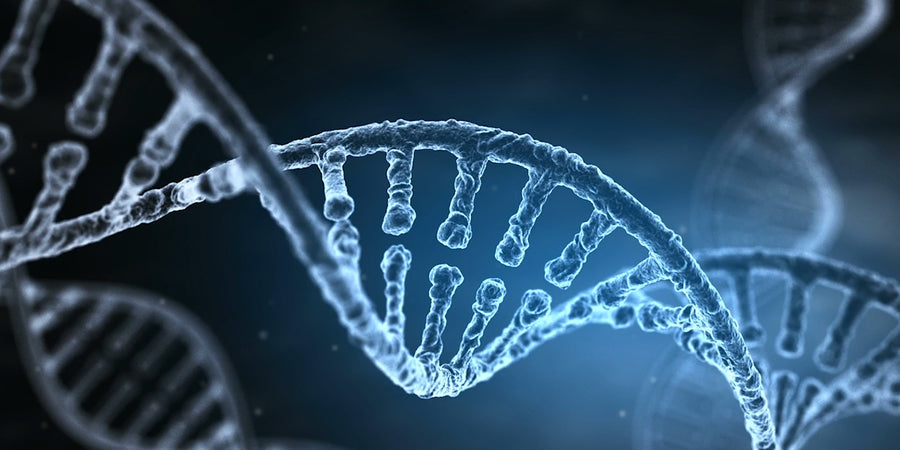 Why Your DNA Should Determine Your Diet