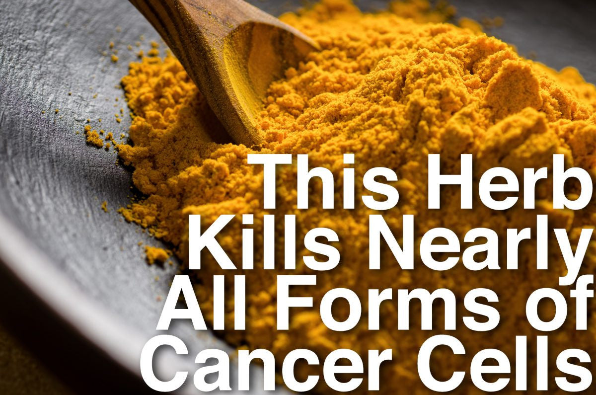 This Herb Kills Nearly All Forms of Cancer Cells