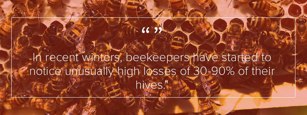 "Several dozens of bees are climbing all over each other trying to access different parts of their honeycomb. The image reads: ""In recent winters, beekeepers have started to notice unusually high losses of 30-90% of their hives."""