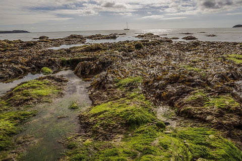 seaweed reduces pollution