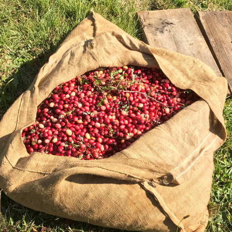 cranberries in burlap