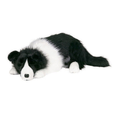 Ditz Border Collie