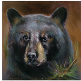 Bear Portrait Gallery Wrap